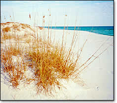 Photo of a Sand Dune on Pensacola Beach
